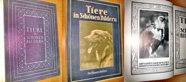 A403-Lumea animalelor in ilustratii frumoase-Album vechi .